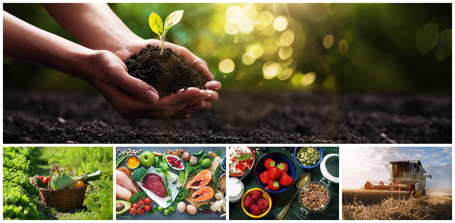 Ernährung und Landwirtschaft
